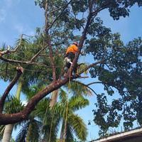 tree-trimming-sq